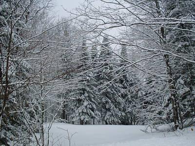 Photograph - Winter Wonderland by Ted Kitchen