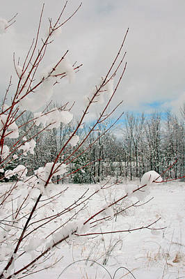 Winter Woods Art Print by Joann Vitali