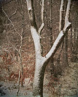 Winter Woods Art Print by Odd Jeppesen