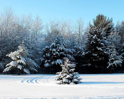 Photograph - Winters Beauty by Ms Judi