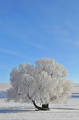 Winter's Coat In Montana's Gallatin Valley Art Print