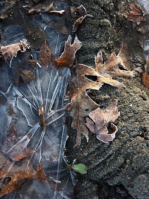 Winter's Grasp Art Print by Pamela Turner