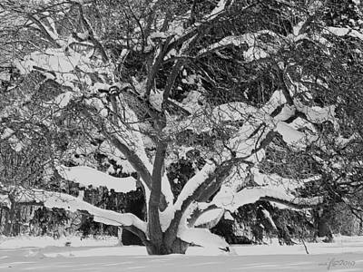 Winterscape Black And White Photograph - Winterscape After Snowy Night In London by Maciej Froncisz