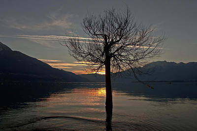 Winter Trees Photograph - Wintertree In The Evening by Joana Kruse