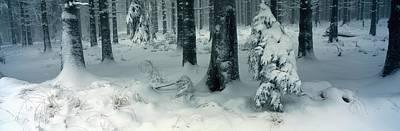 Wintry Fir Forest Art Print by Ulrich Kunst And Bettina Scheidulin