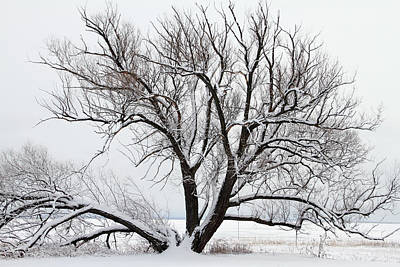 Photograph - Wintry Willow by Mark J Seefeldt