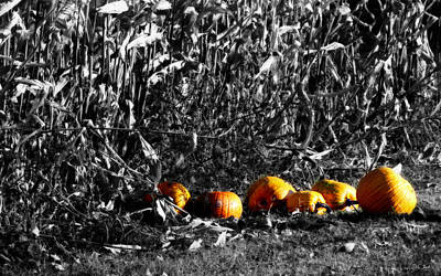 Photograph - Wisconsin Pumpkins by Ms Judi