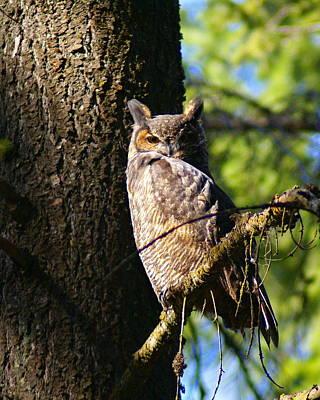 Photograph - Wise Bird 1 by Ben Upham III