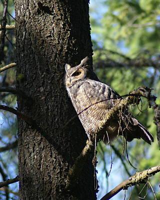 Photograph - Wise Bird 2 by Ben Upham III