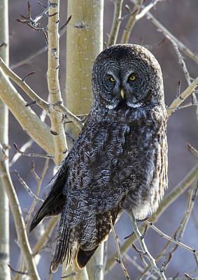 Doug Gray Photograph - Wise Old Owl by Doug Lloyd