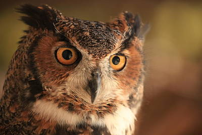 Art Print featuring the photograph Wise Old Owl by Doug McPherson