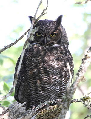 Photograph - Wise Owl by Angie Vogel