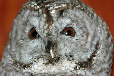 Barn Owl Photograph - Wise Owl by LeeAnn McLaneGoetz McLaneGoetzStudioLLCcom