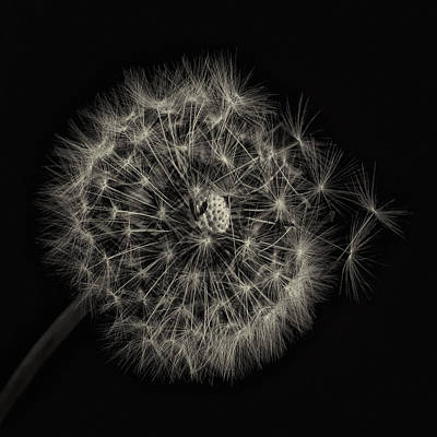 Photograph - Wish by Tim Nichols