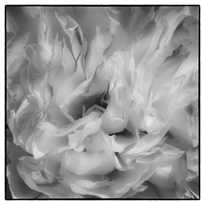 Floral Photograph - Wispy And White II by David Patterson