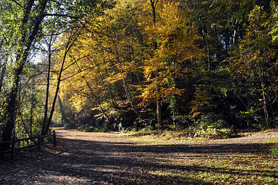 Photograph - Wissahickon Park by Andrew Dinh