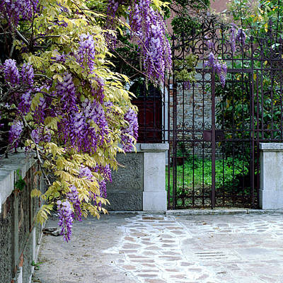 Wisteria In Bloom Photograph - Wisteria And Gate In Venice Italy by Greg Matchick