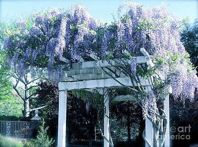 Wisteria In Bloom Photograph - Wisteria In Bloom  by Nancy Patterson