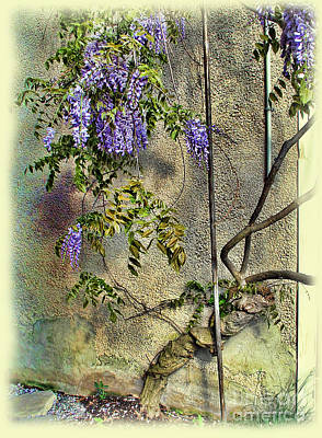 Photograph - Wisteria Wall by Joan  Minchak