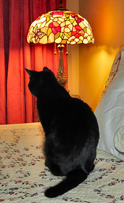 Witch Halloween Cat Wicca Photograph - Witches Cat by Art Dingo