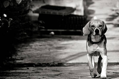 Dog Trots Photograph - With No Fear by Laura Melis