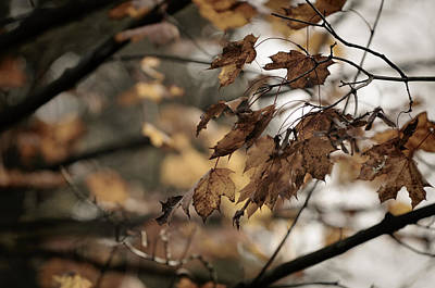 Photograph - Withered Leaves by Sandra Sigfusson