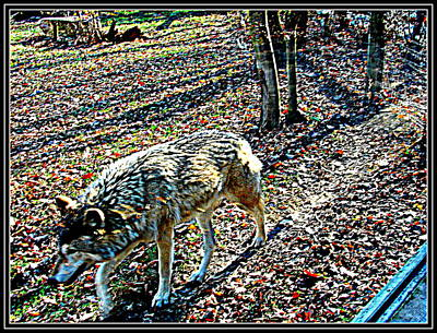 Photograph - Wolf-2 by Anand Swaroop Manchiraju