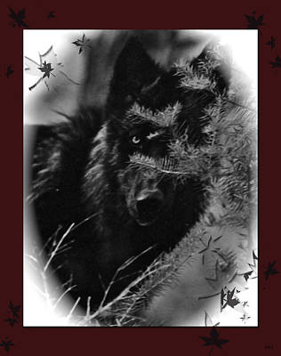 Wolf Black And White Designer Art Print by Debra     Vatalaro