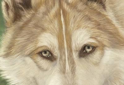 Wolf Eyes Art Print by Teresa LeClerc