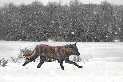 Photograph - Wolf In Snow by Dan Friend