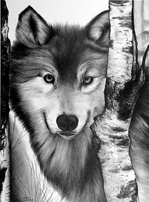 Animals Drawings - Wolf by Jerry Winick