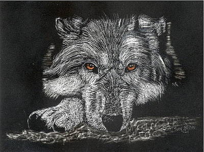 Drawing - Wolf by John Brisson