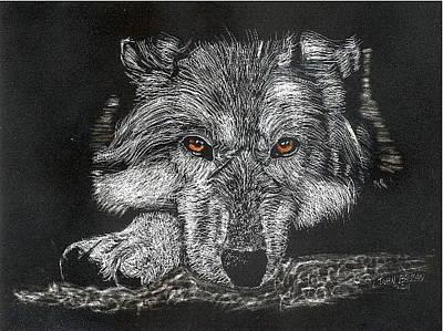 Drawing - Wolf by John Brisson