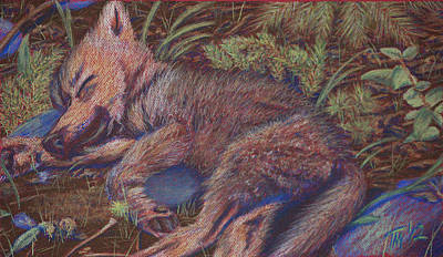 Wolf Pup Napping Art Print by Thomas Maynard