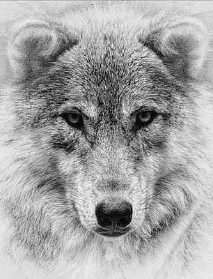 Canines Digital Art - Wolf Stare by Wade Aiken