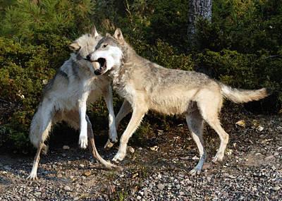 Canines Digital Art - Wolfplay by Wade Aiken
