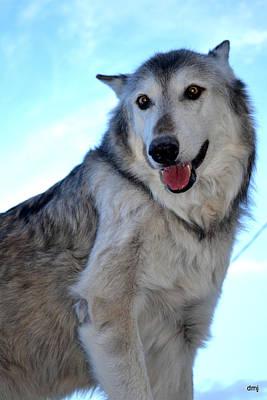 Photograph - wolves VI by Diane montana Jansson