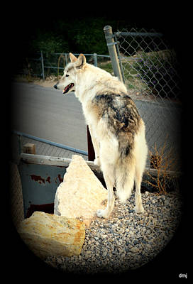 Photograph - wolves X by Diane montana Jansson