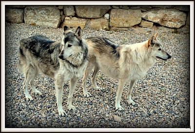 Photograph - wolves XIV by Diane montana Jansson