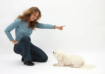 Obey Photograph - Woman Commanding Bichon Frise by Mark Taylor