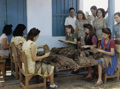 Del Rio Photograph - Women Inspect Tobacco Leaves And Select by Melville B. Grosvenor