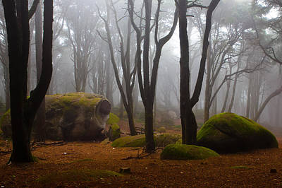 Forest Photograph - Wonderland by Jorge Maia