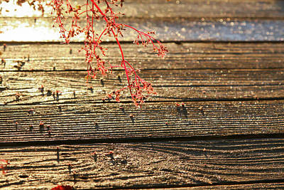 Photograph - Wood Deck Red Sprig by Peter Dyke