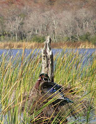 Digital Art - Wood Duck On Lake Tarpon by IM Spadecaller