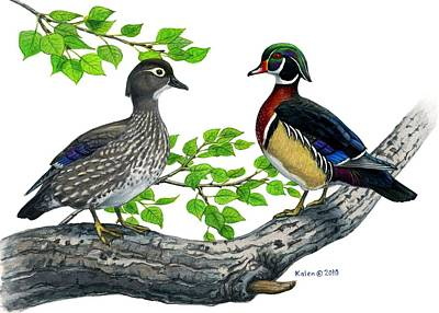 Wood Duck Drawing - Wood Duck Pair In Cottonwood by Kalen Malueg