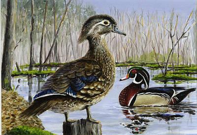 Wood Duck Art Print by Paul Gardner