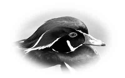 Wood Duck Original