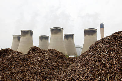 Wood Fuel For Power Station Art Print