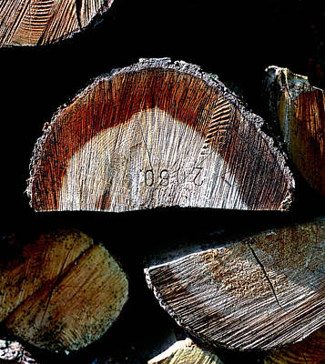 Photograph - Wood. Piled Up Logs. by Juan Carlos Ferro Duque