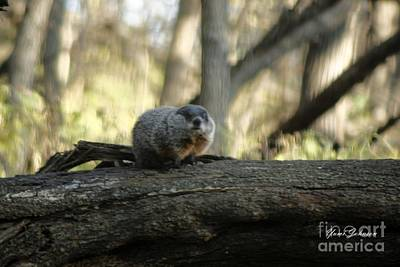 Art Print featuring the photograph Woodchuck by Yumi Johnson